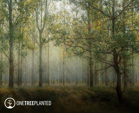 client-expander-reforestation-support